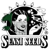 Sensi Skunk regular