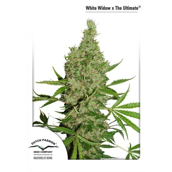 The Ultimate x White Widow